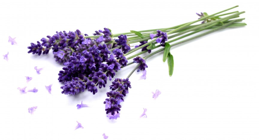 Hand and Stone Aromatherapy - Lavender